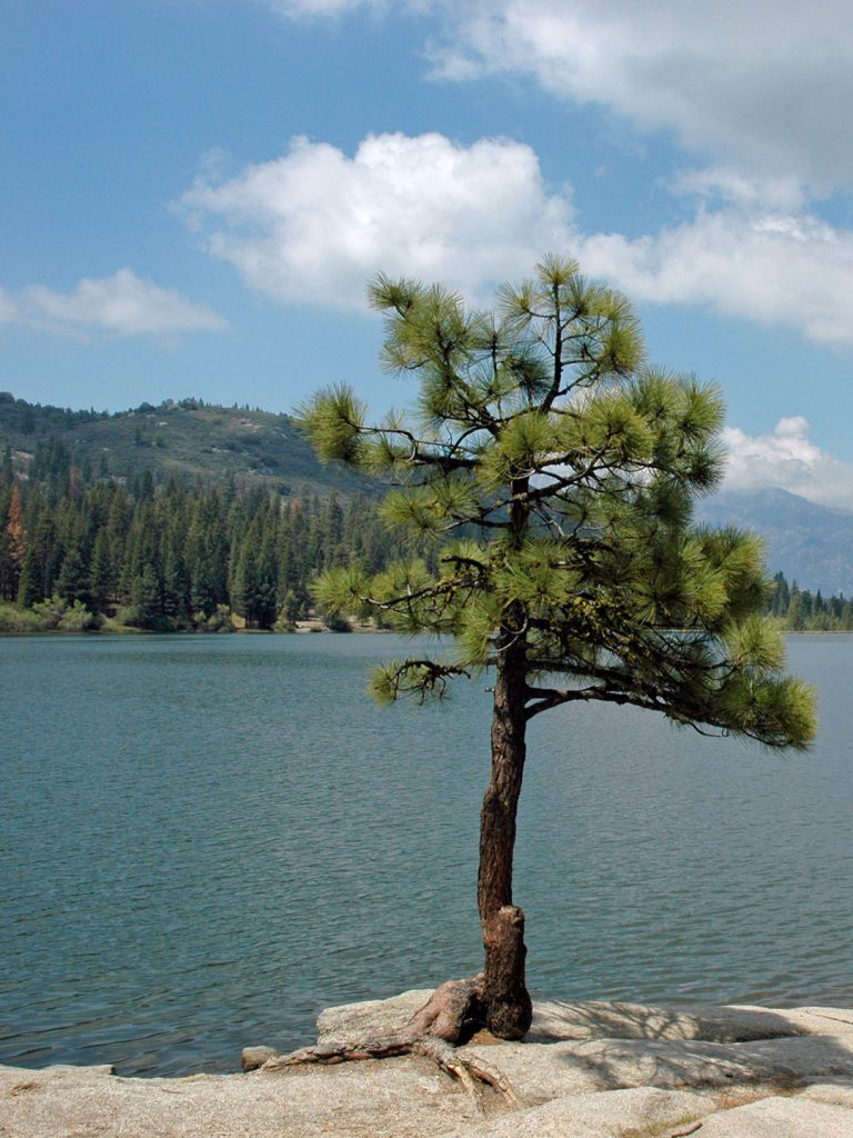 Am Hume Lake